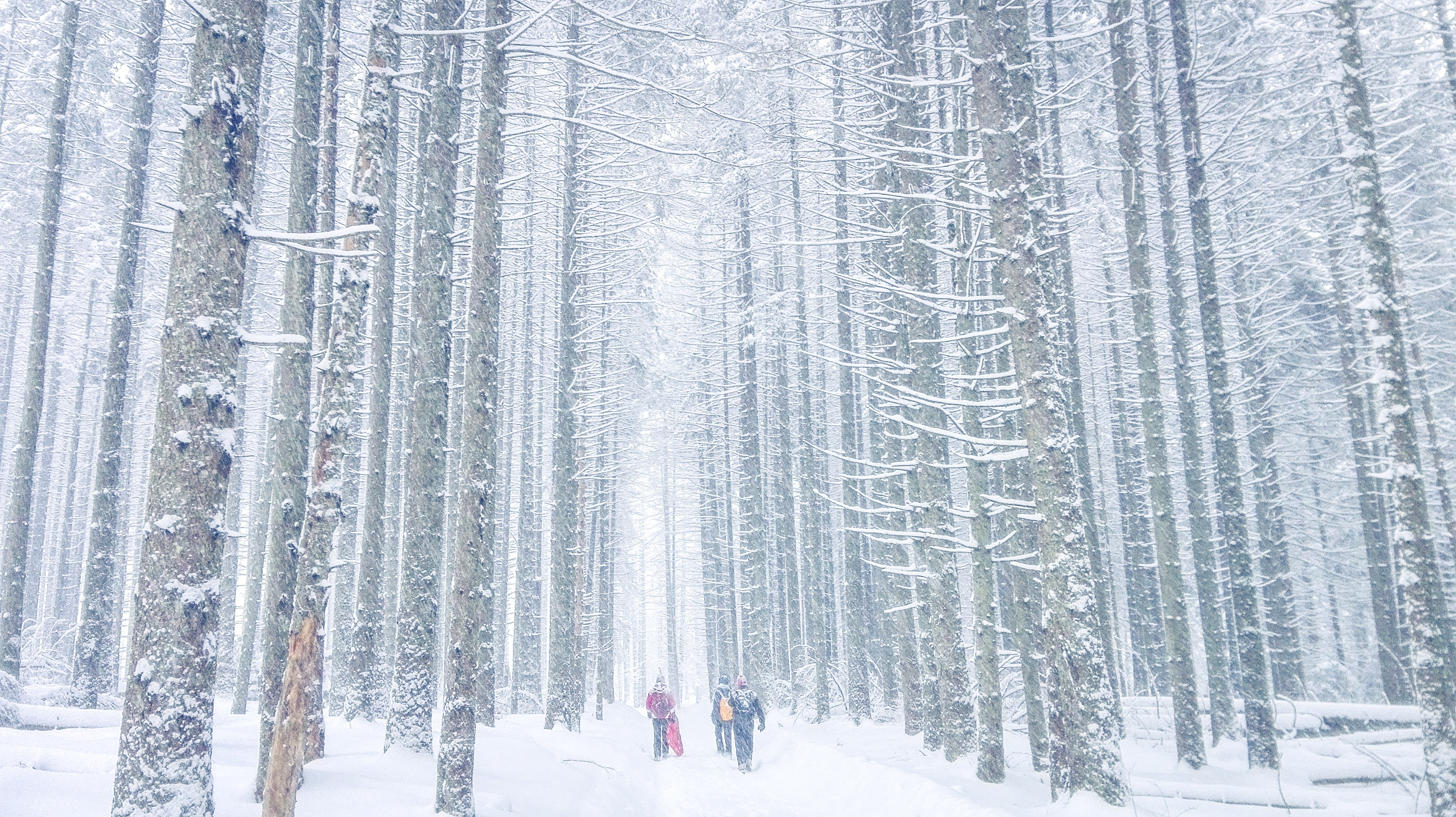 Walking through forbidden forest. Photo by Alis Monte [CC BY-SA 4.0], via Connecting the Dots