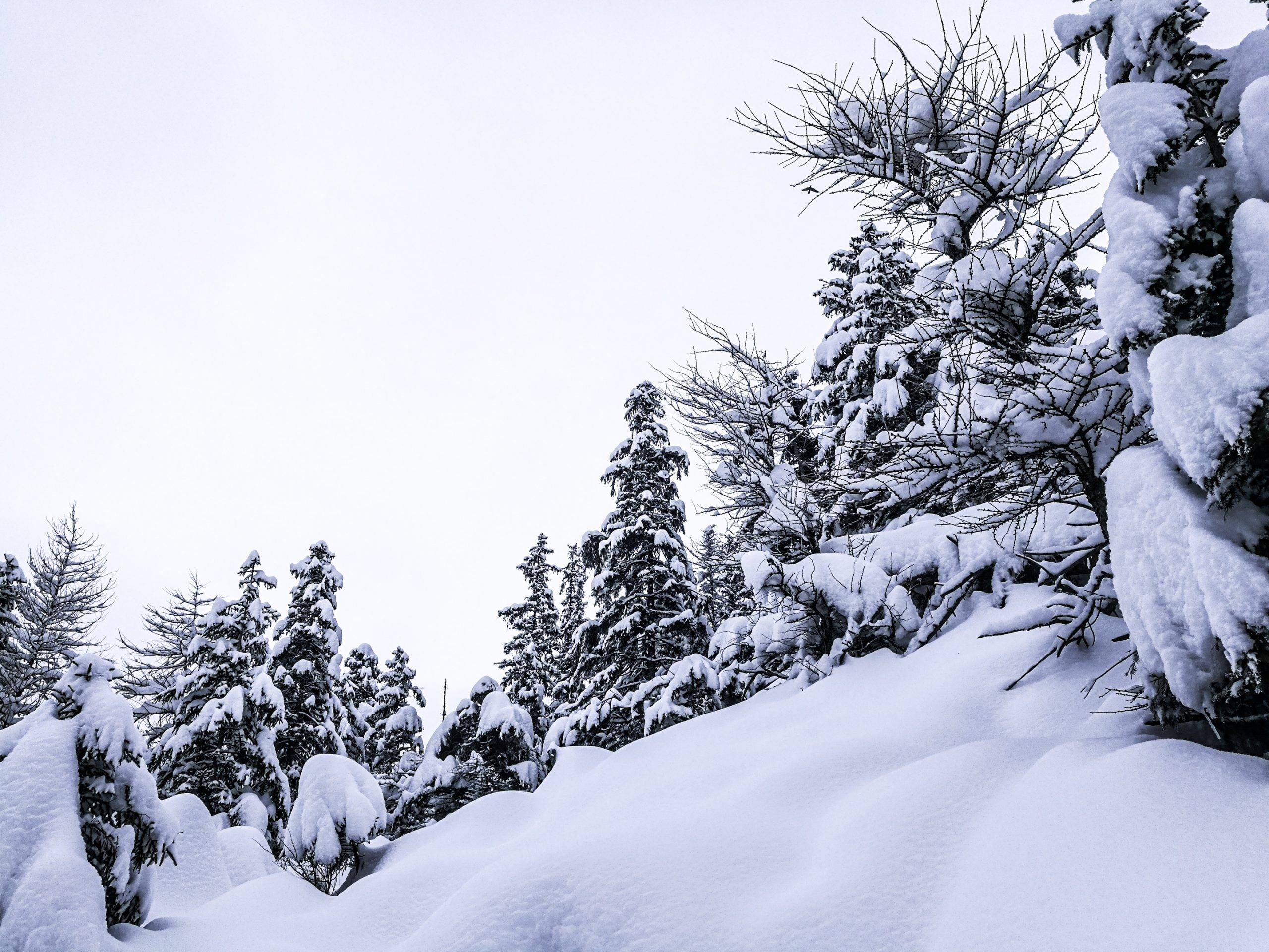 As far as anybody should be concerned, beneath this snow could be the tops of another trees. Photo by Alis Monte [CC BY-SA 4.0], via Connecting the Dots