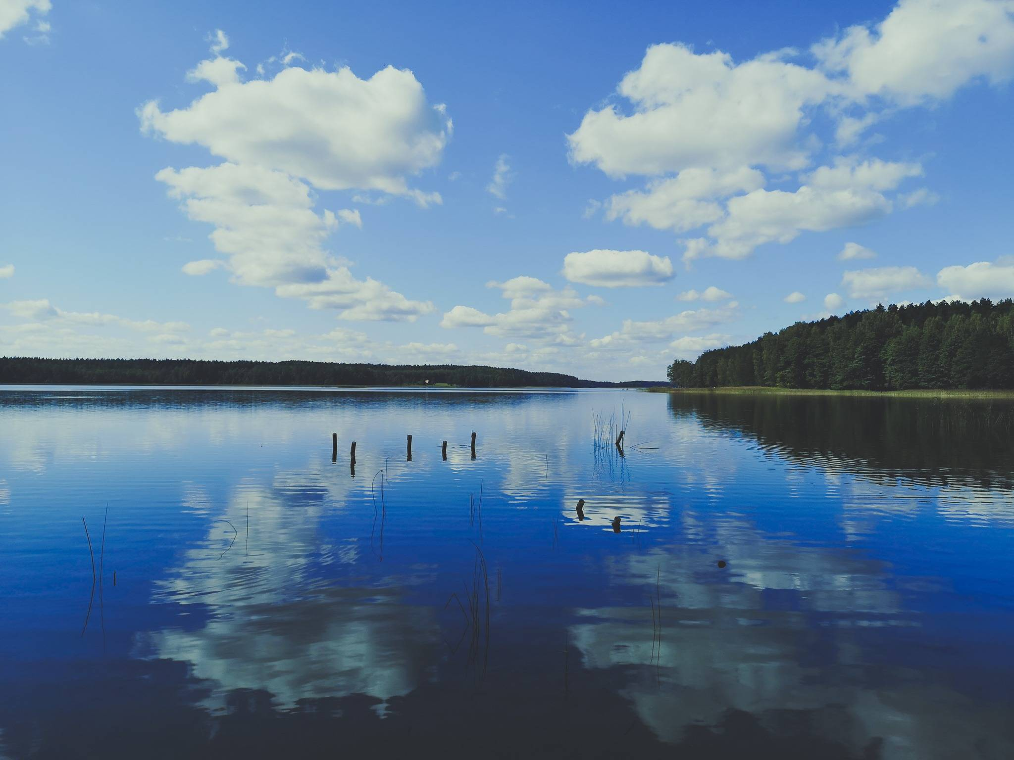 White Lakajai Lake in Labanoras Regional Park, Lithuania. Photo Alis Monte [CC BY-SA 4.0], via Connecting the Dots