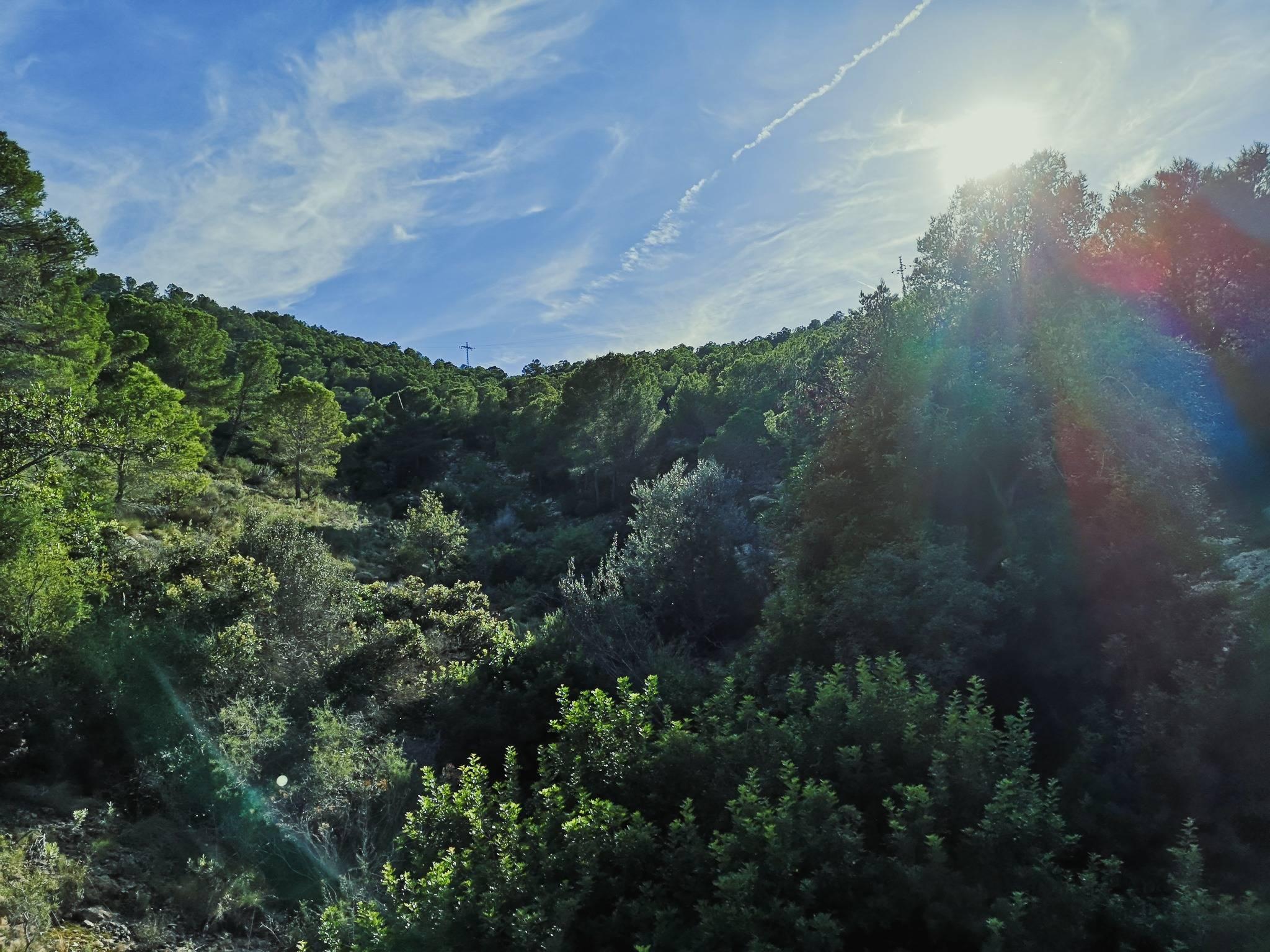 Flora in Camino del Faro, Serra Gelada, Spain. [CC BY-SA 4.0], via Connecting the Dots